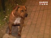 Bursa'da Pitbull dehşeti!