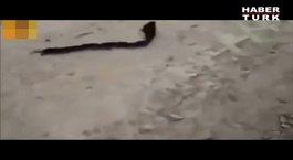 Farelerden yılan taklidi!