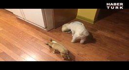 Yalnız yemekten nefret eden köpek!