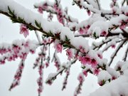 Nisan'da kar yağdı