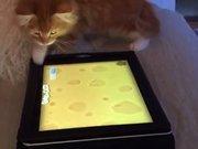 Tabletteki fareyi yakalamaya çalışan kedi