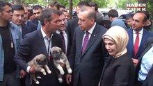 /video/haber/izle/erdogana-aksaray-malaklisi-iki-yavru-kopek-hediye-edildi/141535