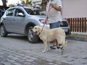 Sokak köpeğine protez